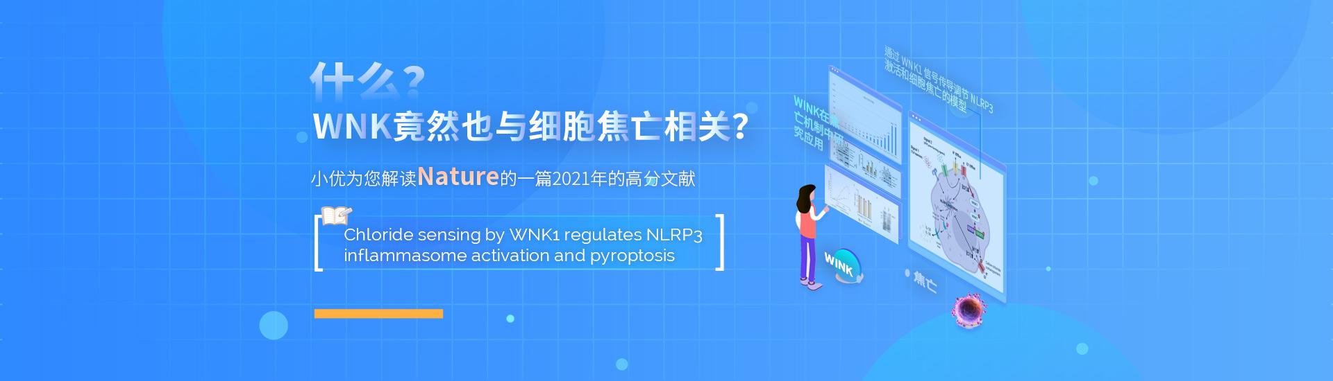 什么?WNK竟然也与细胞焦亡相关?